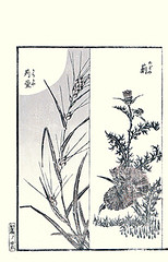 Left  red grass; Right  thistle (Japanese Flower and Bird Art) Tags: red flower art grass japan japanese book thistle picture poaceae cirsium asteraceae woodblock katsushika ukiyo triandra themeda readercollection hokuun