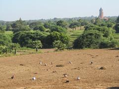 "Bagan: la pagode Pyathada Paya <a style=""margin-left:10px; font-size:0.8em;"" href=""http://www.flickr.com/photos/127723101@N04/23096924910/"" target=""_blank"">@flickr</a>"