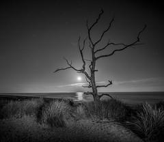 DSC_2883_1 (bullettniko) Tags: longexposure trees bw raw moonlight covehithe