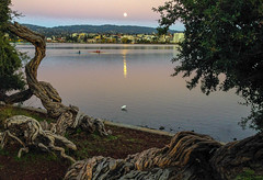 Idyllic (Rich Luibrand) Tags: california reflection boats twilight moonrise lakemerritt egret scullers melaleucatrees