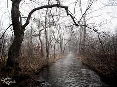 Desolate Winter II (judithrouge) Tags: winter mist tree fog stream nebel bach desolate baum