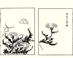 Thistle (Japanese Flower and Bird Art) Tags: flower thistle cirsium asteraceae nobuatsu yamamoto kano woodblock picture book japan japanese art readercollection
