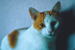 Cats Edition 8 - (21) (Robert Krstevski) Tags: robertkrstevskiblogspotcom robertkrstevski cat pet pets animal animals animallovers animalslove lovely filter filters color colors kitty kitten kittens kitties cute cuteness gato gatos popular macedonia catsedition8 lachatte chatte