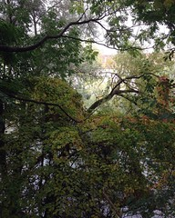 October 15, 2016 15:01:16 (Natascha W) Tags: autumn fall fallfoliage fallcolors autumncolors leaves trees tree bume baum bltter herbst herbstfarben natur nature graz mur murufer riverbank afternoon nachmittag ste branches