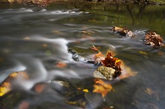 Caught midstream (danalcreek) Tags: creek stream tributary water nd400 nikonnikkor 18x55 leaves fall autumn colors red orange yellow