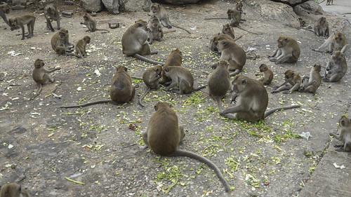 Monkey Ville - Thailand