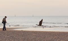 Doug and the goose (epicDi) Tags: portdalhousie canadagoose beach lakeontario stcatharines