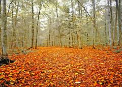 on a forest path (Hal Halli) Tags: forest path trees autumn fall artdigital netartii