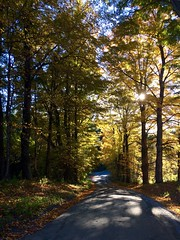 Vermont backroad (Lady Goshen) Tags: autumn foliage color leaves harvest fall tree tres gold yellow orange red vermont countryroad shadows forest