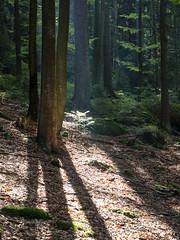 Kleiner Arbersee I (schauplatz) Tags: bayerischerwald bayerwald deutschland lamerwinkel urlaub kleinerarbersee landscape seascape lake bavarianforest forest wald gegenlicht backlighting backlight