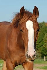 Life is Crazy / Oktober III (Heiko Schneemann) Tags: pferde fohlen foal lifeiscrazy