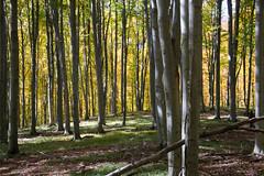DSC_0189 (Pter_Szab) Tags: mtra matra hungary nature autumn colours mountains galyateto galyatet forest hiking nationalpark landscape