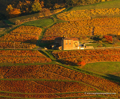 Fall colors (My Planet Experience) Tags: vineyard vine wine colour automn fall color automne sunset stone house tint golden yellow brown red green black mist misty nature landscape panorama horizontal beaujolais rhonealpes france fr myplanetexperience wwwmyplanetexperiencecom
