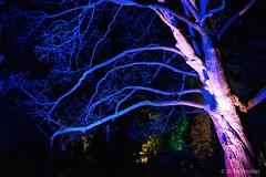 DSC04173 (Twareg) Tags: 2016 aboretum bpw enchanted forest westonbirt bathphotowalk gloucestershire england
