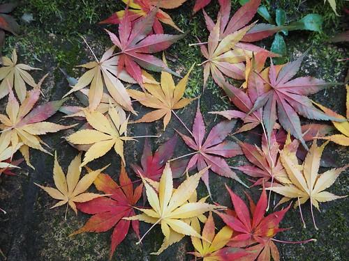 Autumn in Mlyňany Arboretum