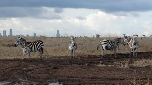 Thumbnail from Nairobi National Park