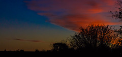 Sunrise (Steve-h) Tags: dawnwinter sunrise nature natur natura naturaleza natural clouds colour colours blue red orange yellow streetlight trees silhouettes rooftop chimneys dublin ireland europe winter december 2016 digital exposure ef eos canon camera zoom lens steveh