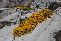 Flowers in Picos de Europa (Frank Talamini) Tags: potes cantabria picosdeeuropa spain north mountains flower