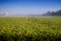 green streak (Christian Collins) Tags: canon ef70200mmf40l t2i michigan green mist fog morning