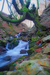 La envidia es más irreconocible que el odio. François de la Rochefoucauld #citas   #DePaseoConLarri #Flickr      -2795 (Jose Asensio Larrinaga (Larri) Larri1276) Tags: 2016 otoño parquenaturaldegorbeiagorbea efectoseda parquenaturaldegorbeia orozko bizkaia basquecountry euskalherria naturaleza cascada airelibre paisaje agua arroyo