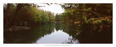 Feather Pine Forest (jasoncremephotography) Tags: tx1 xpan fujinon portra film kodak panoramic taiwan hualien