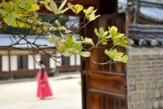 Discovering Seoul (J@photo) Tags: seoul seoultravel huwon secretgarden southkoreatravel changdeokgungpalace