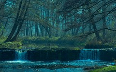 Mystic river in forest (nickneykov) Tags: nikond750 nikon d750 tamron 90mm macro forest river pancharevo sofia bulgaria landscape mystic