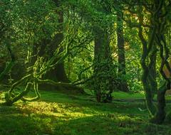 Japanese Garden Moss D (jim.choate59) Tags: japanesegarden portlandjapanesegarden trees moss fantasy fairytale magic grass green jchoate forest enchanted verdant on1pics