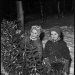 PEM-STO-00233 Rune og Eirik Stokmo henter julegran thumbnail