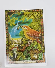 Daily messages from #thedruidanimaloracle #thedruidanimaloracledeck #thedruidcrafttarot #wren druien allows us to glimpse the beauty of gods / goddesses in all things. he tells us that small is beautiful and that self realisation lies not in gradually or (makeuptemple) Tags: daily messages from thedruidanimaloracle thedruidanimaloracledeck thedruidcrafttarot wren druien allows us glimpse beauty gods goddesses all things he tells that small is beautiful self realisation lies gradually or apparent power but humility gentleness subtlety cunning if tempered with humour good intentions way achieving great an economy effort rational honest use achievements others oraclecards oraclecardreaders oraclecardreadersofinstagram oraclecardreading oraclecard oraclecardcollection oraclecardcollections oraclecardcollector tarotreadersofinstagram tarotreading tarotcommunity tarotcollector tarotdecks february 15 2017 1233pm