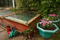 Things to do this month - March (thegardenersblog) Tags: coldframe greenhouse mini garden gardener gardening allotment gardens glass wood wooden timber handmade homemade plants flowers pot tub plantpot fence slabs backgarden cane gloves compost cold frame growhouse leanto propagation raised storage building lid shed plot wintering summer frost protect protection