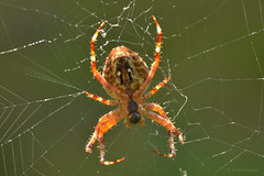 Holding it together... (pro.henrik) Tags: spider d800 summery sooc holdingittogether straightoutofcamera nikond800 sigmaex150mmf28 somrigt fotosondag fs150823