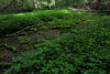 wetland (Molly Des Jardin) Tags: park plants usa green wet water leaves creek forest moss rocks state pennsylvania rocky ferns mossy 2014 undergrowth ferny susquehannock drumore 43215mm