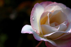 Kapika na ri (Uoplesk) Tags: flowers weather nice day good