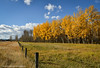 Windy Afternoon (Witty nickname) Tags: autumn trees fall nature grass yellow fence kananaskis highway bluesky barbedwire barbedwirefence kananaskiscountry 2470mm highway40 nikkor2470mmf28 nikond800