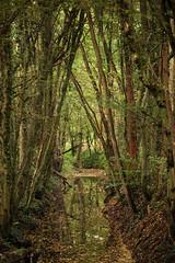 (wistine) Tags: autumn trees tree herbst bume baum 2015
