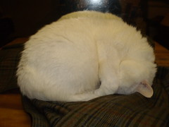 Mystic (universalcatfanatic) Tags: wood blue sleeping red cats brown white green eye up cat table mirror wooden eyes sleep top coat flash curled mystic lay laying stipes