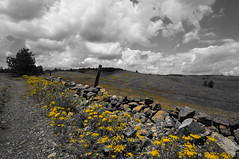 Yellow flowers (Goran Joka) Tags: flowers sky nature yellow clouds fence landscape countryside rocks outdoor serbia yellowflowers wirefences divčibare