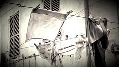 il bucato (carlini.sonia) Tags: sonia bucato pannistesi