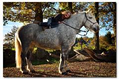 Sandra et Um (Laurent CLUZEL) Tags: horse cheval nikon wireless remote creuse trigger limousin percheron trait speedlite d610 2485mm strobist yongnuo