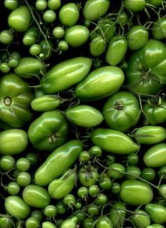 56961.01 Solanum lycopersicum