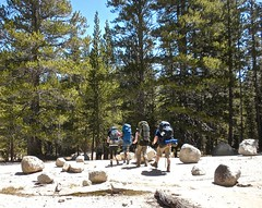 Hiking out of Tuolumne Meadows 1 (Lost in Flickrama) Tags: yosemite nationalpark hiking backpacking adventure pine trees california trail tuolumnemeadows granite rocks