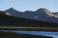CYM_4756 (nature1970613) Tags: china tibet
