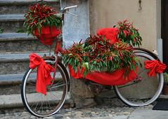 """una """"piccante"""" biclicletta (ballcla (Claudio Ballestra)) Tags: red bicycle rouge rojo nikon piment liguria chiles bicicleta chilli rosso peperoncini vlo bicicletta finalborgo rivieradiponente ponenteligure nikon7000 ballcla"""