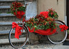 """una """"piccante"""" biclicletta (ballcla (Claudio Ballestra)) Tags: red bicycle rouge rojo nikon piment liguria chiles bicicleta chilli rosso peperoncini vélo bicicletta finalborgo rivieradiponente ponenteligure nikon7000 ballcla"""