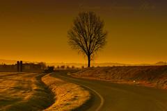 sempre buio appena prima dell'alba (Gianni Armano) Tags: photo strada italia foto natura campagna piemonte prima albero sempre colori dicembre gianni  alessandria buio immagine 2015 appena dellalba armano