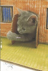 You Choose Tag (Lillie's Postcards (thehexwitch)) Tags: postcrossing postcard received kitten cute adorable cat