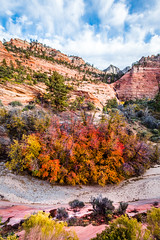 To the Zion Narrows! Nikon D810 Fine Art Zion National Park Autumn Hike! Dr. Elliot McGucken Fine Art Landscape Photography! (45SURF Hero's Odyssey Mythology Landscapes & Godde) Tags: to zion narrows nikon d810 fine art national park autumn hike dr elliot mcgucken landscape photography landscapes nature arts natural bryce canyonautumn winter hdr majestic leaves sexy hot sexiest legs long hottest pretty prettiest ballerina gilr girls woman women blonde blue eyes gorgeous beauty beautiful