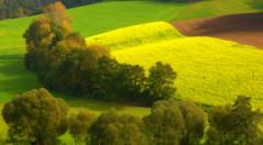 Velvety Fields (be there...) Tags: autumn jahreszeiten herbst felder fields yellow green velvet samt bume trees outdoor structure