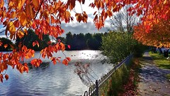 Winterley Pool. (Eddie Crutchley) Tags: europe england cheshire outdoor nature sunlight beauty autumn colour trees pool simplysuperb greatphotographers